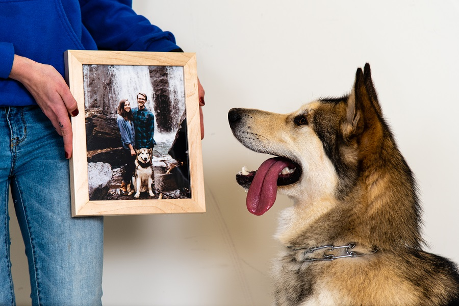 dog looking at a framed photo