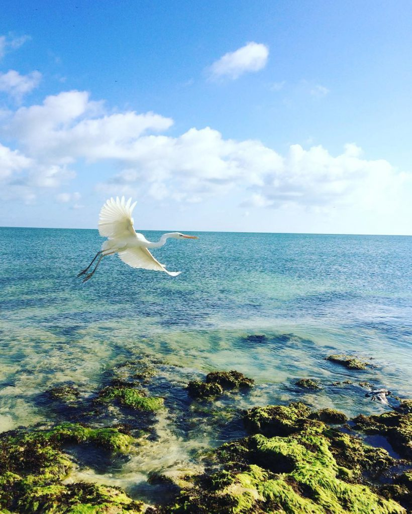 Sandspur Beach, Florida