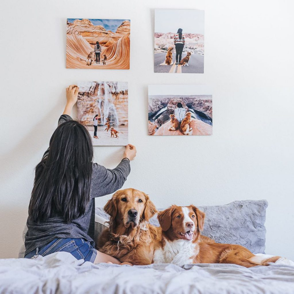 gallery wall of dog