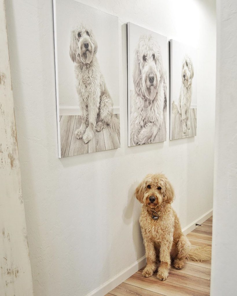 gallery wall with dog imagery