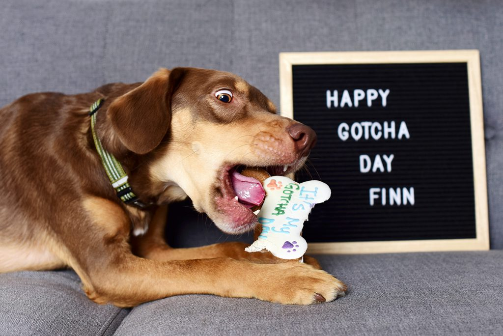 dog on gotcha day
